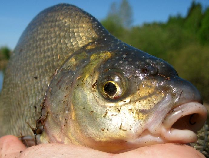 рыбалка в касимове на оке в 2015 видео